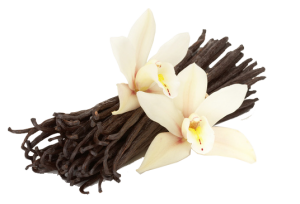 about our Vanilla Bean...